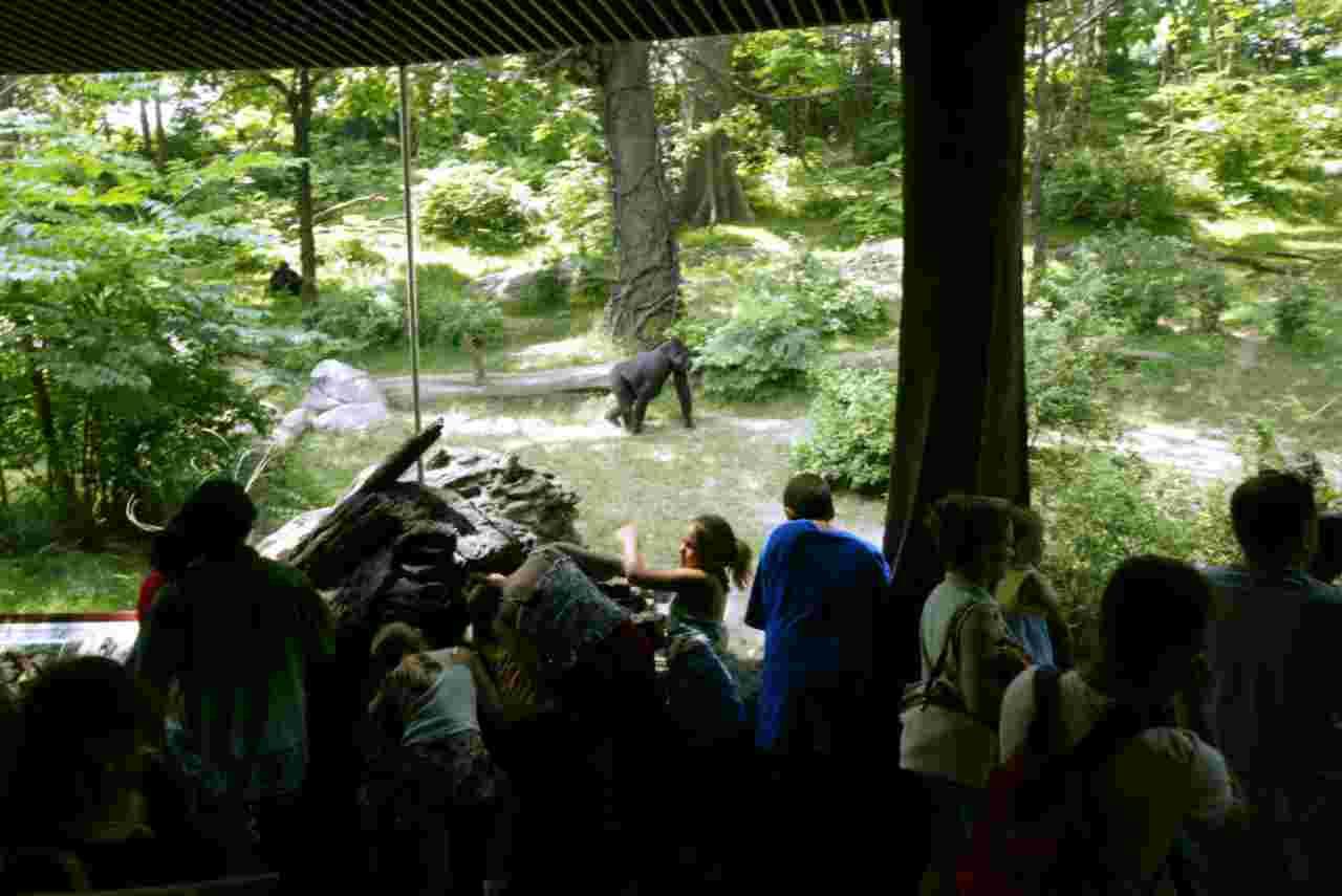 Visitatori allo zoo del Bronx