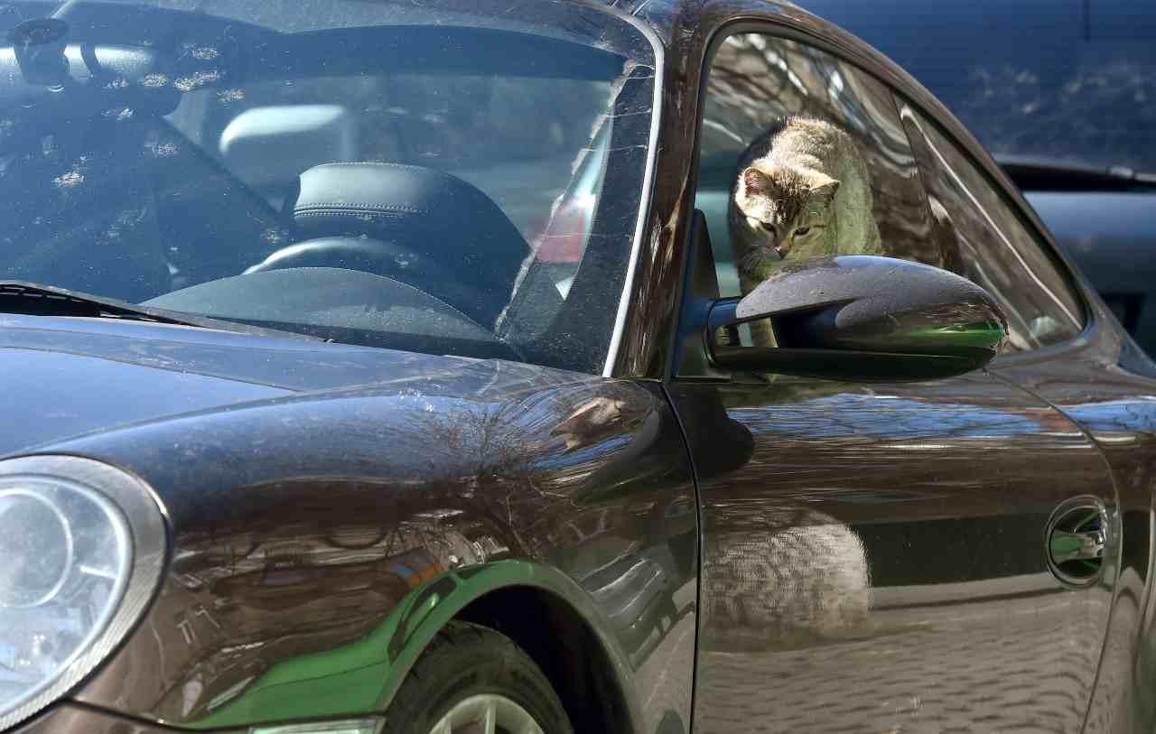 Gatto incastrato in auto